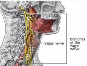 nerf vague