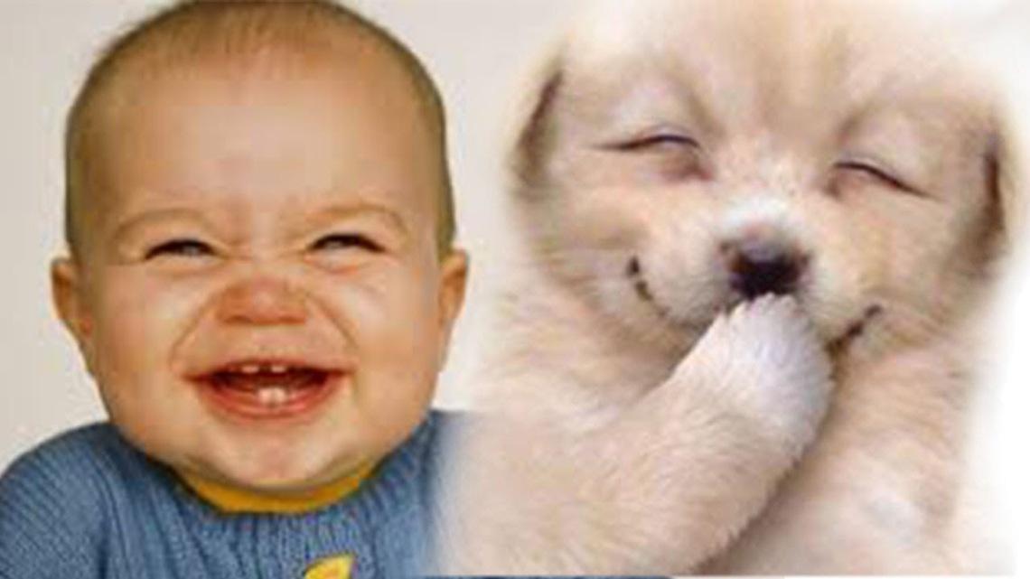 chien et bebe du rire